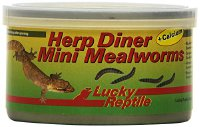 Lucky Reptile Herp Diner Mini Mealworms 35 g, 2er Pack (2 x 35 g) (HDC-33)